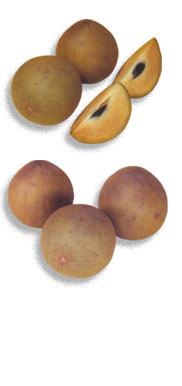 fruits_chikoo_01.jpg